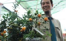 Ngắm vườn quất cảnh mini đem lại tiền tỷ ở làng Tứ Liên