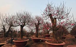 Những khu vườn bạc tỷ ở Nhật Tân