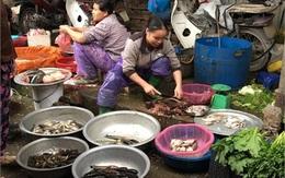Đại hạn cá chết, dân Hà Nội không dám ăn hải sản đông lạnh