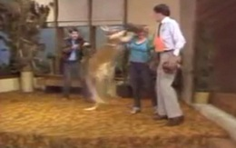 Kangaroo đeo găng, đấm túi bụi MC trên truyền hình