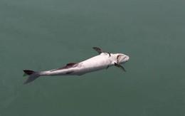 Thừa Thiên – Huế kết luận cá chết là do nước biển nhiễm chất cực độc