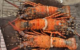 Top 16 món ăn hải sản ngon nổi tiếng không nên bỏ qua