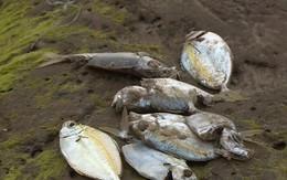 Vụ cá chết hàng loạt: Chính phủ báo cáo gì trước Quốc hội?