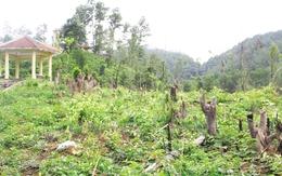 Thái Nguyên: Tan hoang rừng Khuôn Mánh