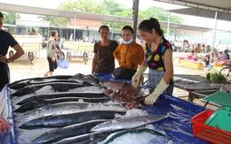 Du lịch Cửa Lò vẫn tấp nập sau sự kiện cá chết ở miền Trung