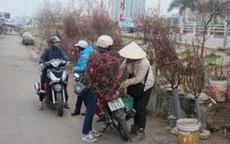 Người Hà Nội nói về thú chơi đào vào rằm tháng Giêng