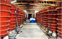Đính chính và cáo lỗi về thông tin nước mắm nhiễm asen