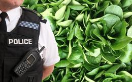 Chồng báo cảnh sát vì vợ cho các con ăn chay