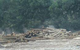 """Sản xuất gỗ dăm không phép tại Nghệ An: Lãnh đạo tỉnh có bị """"che mắt"""" bởi báo cáo từ cấp dưới?"""