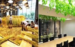 Lạ lùng văn phòng trồng rau như trang trại, nhân viên tha hồ gặt lúa, hái rau
