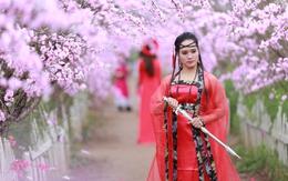Trời lạnh buốt, vườn đào Nhật Tân vẫn tấp nập người đến chụp ảnh Tết