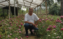 Đảo hoa anh đào tuyệt đẹp trên đất chiến trường lịch sử Điện Biên