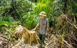 Xử lý trách nhiệm kiểm lâm trong việc khai thác gỗ trái phép ở Quan Sơn