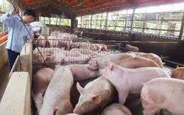 Thực hư thông tin Trung Quốc đồng ý nhập khẩu thịt lợn Việt Nam