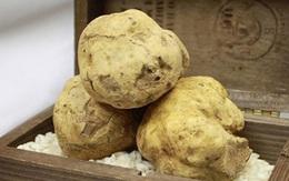 Loài nấm thần dược phòng the giá 7 tỷ đồng/cây, đại gia muốn ăn cũng chùn tay