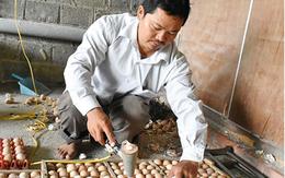 Ngưỡng mộ người đàn ông tật nguyền kiếm bộn tiền từ nuôi gà