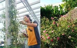 Ngắm mãi không chán vườn hoa hồng đẹp như mơ của chàng họa sĩ 8x Đà Nẵng