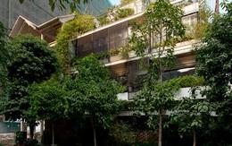 Ngôi nhà phủ kín cây xanh giữa lòng Hà Nội được báo Mỹ ca ngợi