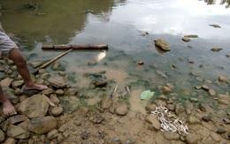 Thanh Hóa: Cá tự nhiên chết bất thường, chưa rõ nguyên nhân