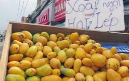 Sài Gòn: Xoài mút Trung Quốc lại đội lốt xoài Châu Đốc tràn chợ