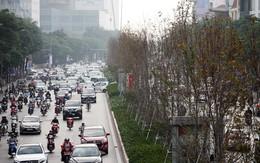 Hà Nội: Hàng phong trên đường Trần Duy Hưng chưa kịp chuyển màu đỏ đã bất ngờ héo úa