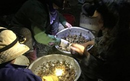 """Cua đồng tăng giá """"sốc"""", người dân đổ ra ruộng săn trong đêm"""