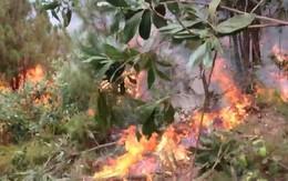 Nghệ An: Huy động hàng ngàn người dập lửa ở các cánh rừng thông của 3 huyện