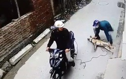 Đường dây thực hiện 40 vụ trộm chó trong hai tháng