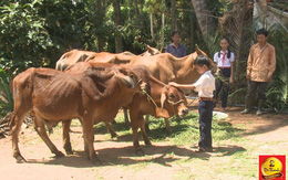 Trà Dr Thanh mang hơi ấm mùa xuân đến cho những hộ nghèo ở Bình Định