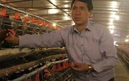 Nuôi gà ở chuồng lạnh lãi 2 tỷ đồng/năm