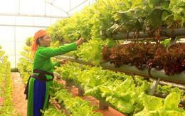 Người làm nông nghiệp trồng gì và trồng như thế nào để có năng suất cao?
