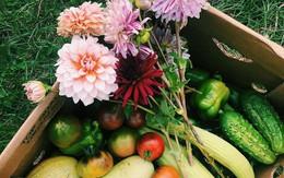 Khu vườn đẹp như tranh vẽ khiến nhiều người ngẩn ngơ khi bước qua của cô gái 20 tuổi có niềm đam mê trồng trọt