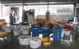 Người cao tuổi Bố Trạch tích cực tham gia phát triển kinh tế