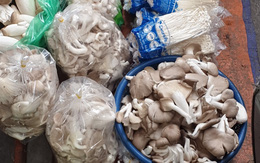 Nấm Trung Quốc tung hoành khắp chợ dân sinh