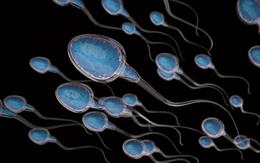 Tinh trùng có thể sống được bao lâu ngoài cơ thể