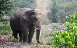 Hà Tĩnh: Phát hiện thi thể người đàn ông nghi bị voi rừng quật chết