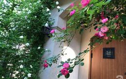 Khu vườn hoa hồng trước nhà đẹp như cổ tích của người đàn ông Việt ở Nhật