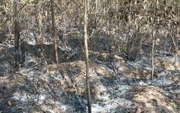 Tạm giam thanh niên đốt rừng để... trả thù