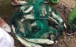 Sau mưa ngập, người dân Thủ đô hào hứng bắt hàng tấn cá dưới sông Kim Ngưu