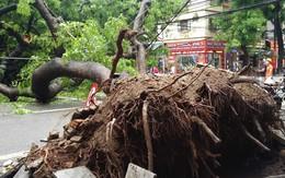 Hà Nội: Dân hốt hoảng vì cây xà cừ cổ thụ bật gốc, cành đập vào 4 căn nhà, 1 chiếc taxi lúc rạng sáng
