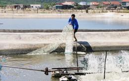 Hà Tĩnh: Đào tạo nghề, giải quyết việc làm cho người dân sau sự cố môi trường biển