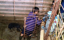 Cận cảnh căn hầm 'bí mật' trong đường dây trộm hơn 100 tấn chó chấn động xứ Thanh