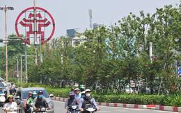Hàng cây phong lá đỏ chưa được như người dân Thủ đô kỳ vọng