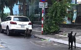 Hà Nội: Chủ nhân đàn chó dữ thả rông bị phạt gần 1 triệu đồng