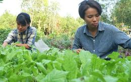 Hai cô gái trẻ bỏ công việc lên rừng làm nông nghiệp thuận tự nhiên