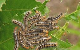 Đừng mua thuốc trừ sâu ngoài cửa hàng mà độc hại, 6 loại dung dịch thiên nhiên này sẽ giúp bạn tiêu diệt chúng
