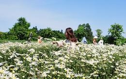 Chị em tíu tít chụp ảnh tại vườn cúc họa mi nở sớm nhất của làng hoa Nhật Tân