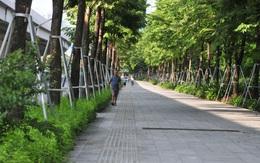 Hà Nội: Ngắm vỉa hè đẹp mắt phủ kín cây xanh trên đường Phạm Văn Đồng