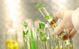 Tinh chất tế bào gốc thực vật Dr. Skin Anpha và ứng dụng Đột phá trong Nghiên cứu khoa học vào sản phẩm chăm sóc sức khỏe