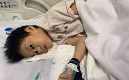 Hải Phòng: Bé trai ăn nhầm thuốc diệt chuột đã tỉnh lại
